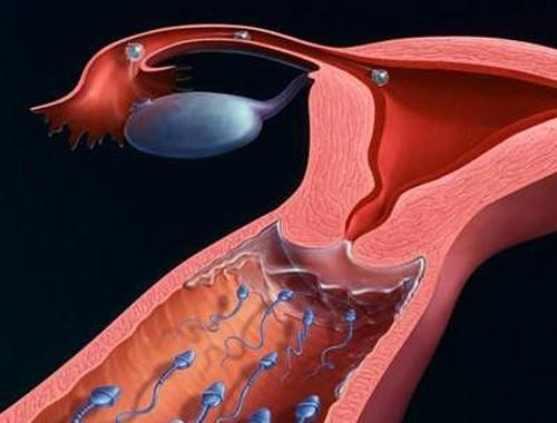 Trứng rụng sống được bao lâu trong tử cung là thông tin mà nhiều bạn nữ muốn tìm hiểu.