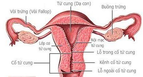 Dính buồng tử cung cần được chẩn đoán và điều trị kịp thời