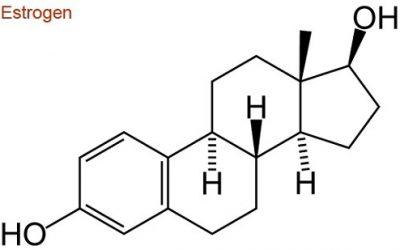 Hoóc-môn nữ estrogen là gì?