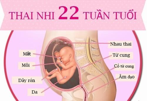 Ở tuần 22, mọi cơ quan của bé gần như đã hoàn thiện