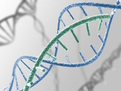 Các bố mẹ mang nhiễm sắc thể chuyển đoạn làm tăng nguy cơ đẻ con mắc hội chứng down