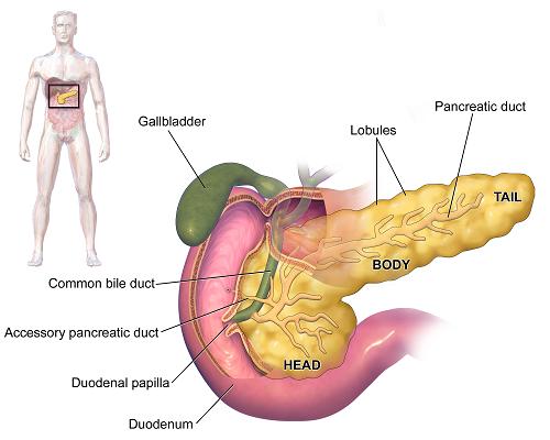 Ung thư đầu tụy phổ biến nhất, chiếm khoảng 70% ca mắc ung thư tụy
