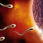 Niêm mạc tử cung dày bao nhiêu thì rụng trứng?