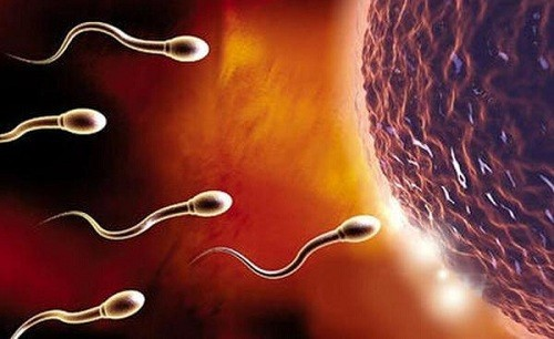Niêm mạc tử cung dày bao nhiêu thì rụng trứng, bạn nữ đã biết chưa?