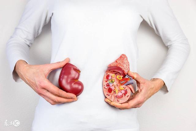 Suy thận là sự suy giảm việc thực hiện các chức năng của thận, khi mà việc thực hiện các cơ chế bài tiết không còn đảm bảo được nữa dẫn đến sự tồn đọng trong cơ thể các chất độc hại.