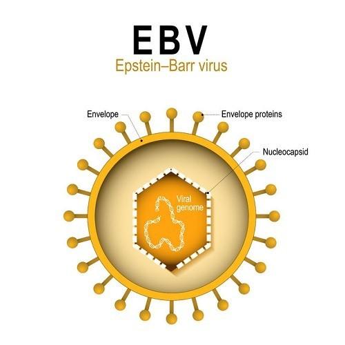 EBV tăng nguy cơ ung thư vòm họng