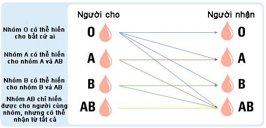 Các lý do phổ biến cho việc kiểm tra nhóm máu bao gồm: khám thai, phẫu thuật, hiến nội tạng, truyền máu