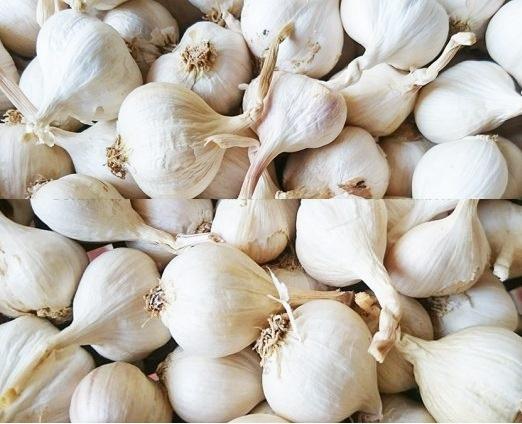 Chỉ cần một nhánh tỏi trắng mỗi ngày có thể kích hoạt enzym của gan, giúp cơ thể tăng cường thải độc tố.