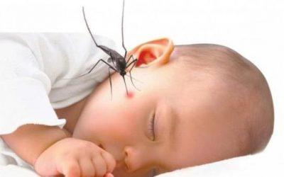 Bệnh sốt xuất huyết ở trẻ em rất nguy hiểm, ba mẹ cần bảo vệ trẻ đúng cách