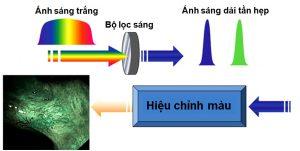 kỹ thuật nội soi với giải tần ánh sáng hẹp (NBI)