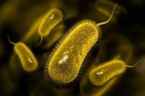 nên ăn gì để tiêu diệt vi khuẩn HP