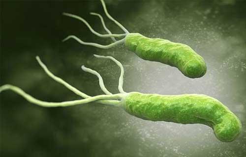 tìm hiểu vi khuẩn hp có nguy hiểm không?