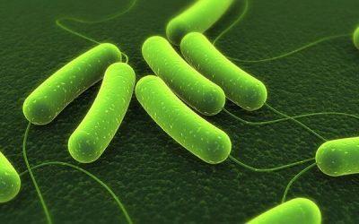 Vi khuẩn HP có chữa được không?