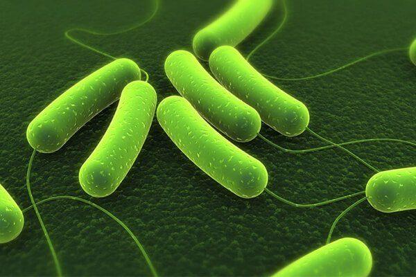 vi khuẩn hp có chữa được không? bằng cách nào?