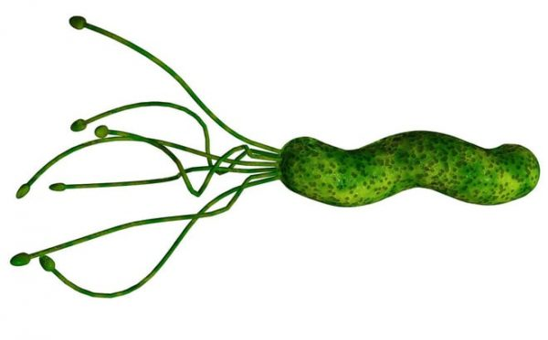 vi khuẩn hp có lây không?
