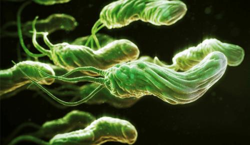 vi khuẩn hp là gì?