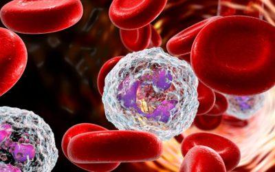Số lượng bạch cầu trong máu ở người bình thường là bao nhiêu?