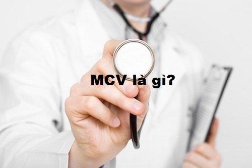 mcv trong máu là gì?