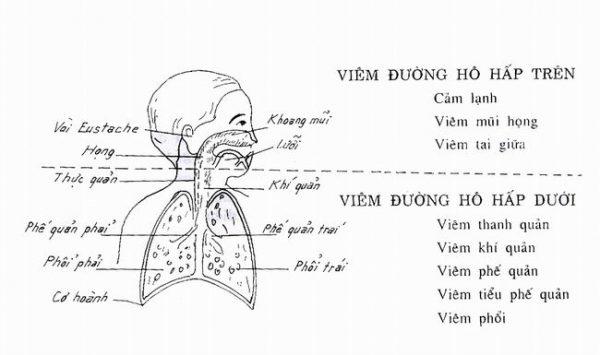 Mô tả đường hô hấp trên và dưới ở trẻ. (ảnh minh họa)