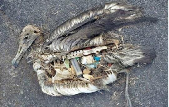 """Rác thải nhựa không được xử lý thải ra biển """"bức tử"""" sinh mạng sống của nhiều loài sinh vật."""