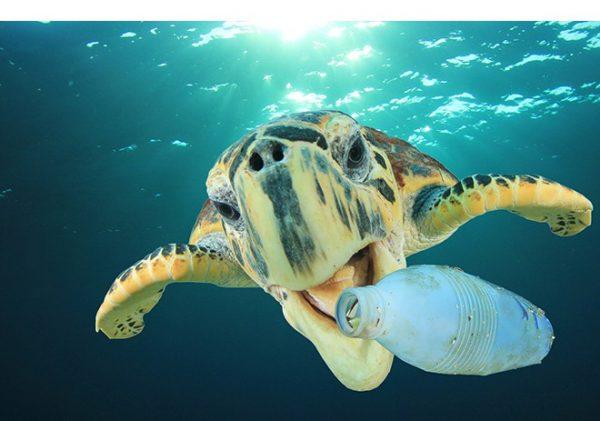 Rác thải nhựa trôi dạt ra đại dương giết chết nhiều loài sinh vật biển.