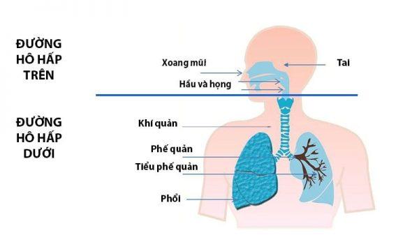 Nhận biết sớm các dấu hiệu viêm đường hô hấp trên ở trẻ em