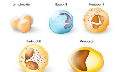 Baso là gì? Ý nghĩa của chỉ số Baso trong xét nghiệm máu