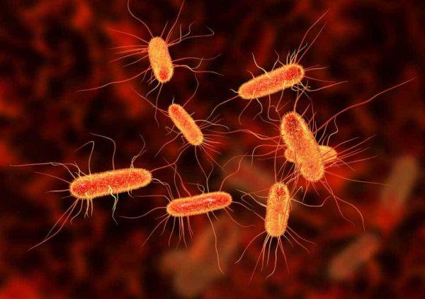nguyên nhân gây nhiễm khuẩn đường tiết niệu