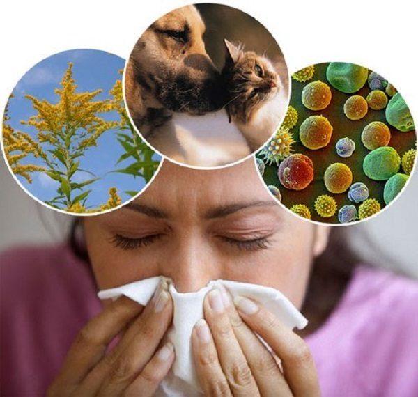 3 nguyên nhân chính gây viêm mũi dị ứng