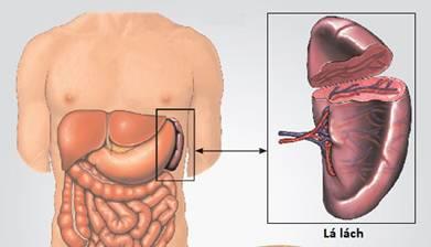 đau sườn trái dưới tim nguyên nhân do đâu?