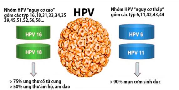 Virus HPV lây nhiễm qua đường tình dục gây nhiều bệnh lậu trong đó có bệnh sùi mào gà. (ảnh minh họa)