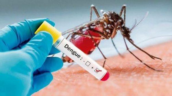 Muỗi đốt có thể gây bệnh sốt xuất huyết cần cho bé đi thăm khám để điều trị kịp thời.