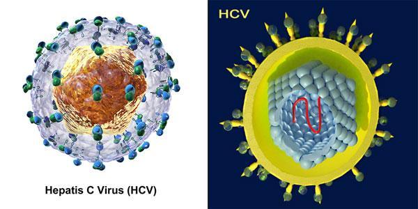 Để hiểu viêm gan C là gì cần biết rõ nguyên nhân gây ra bệnh