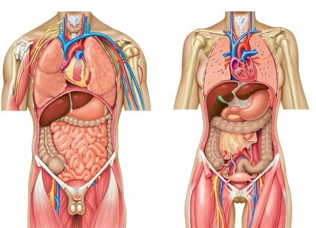 Tùy theo vị trí, mức độ và triệu chứng đi kèm, đau bụng cảnh báo nhiều bệnh lý khác nhau