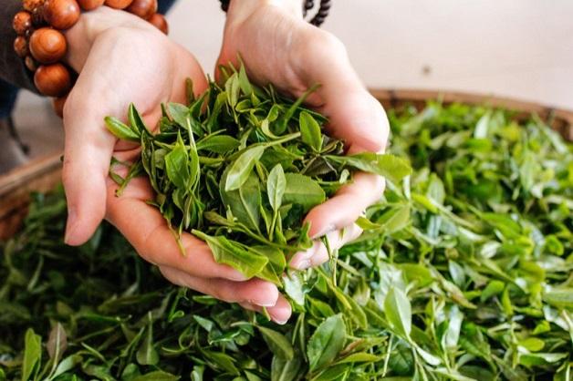trà xanh tốt cho lá gan