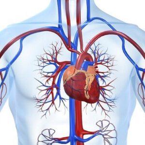 Những sai lầm nghiêm trọng khi bệnh nhân bị hẹp van tim