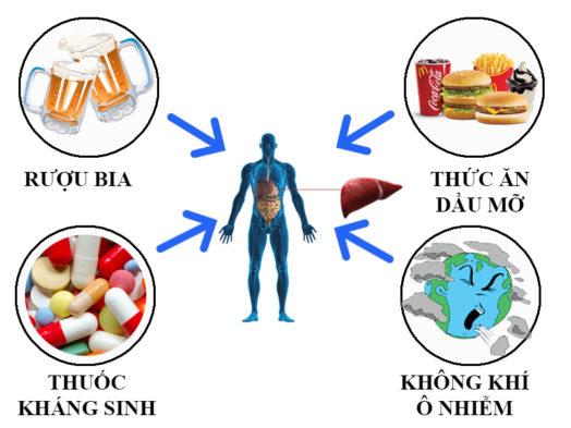 Một số nguyên nhân gây rối loạn chức năng gan