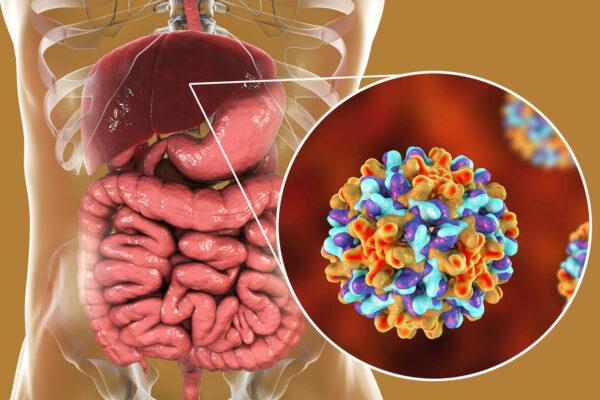 con đường lây lan virus viêm gan B